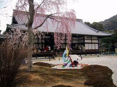 波心庭枝垂れ桜より方丈を見る Light up 2002 of Higashiyama, Kyoto Kodai-ji Temple spring