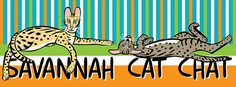Savannah Cat Chat http://www.savannahcatchat.com/ https://www.behance.net/gallery/23422601/Savannah-Cat-Chat