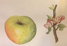 My Arts, Fruit
