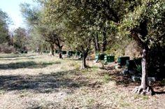 Pour découvrir la fabrication du miel, mon ami Daniel vous propose une visite guidée dans son atelier d'extraction : Je suis un petit apiculteur, amateur passionné qui exploite un rucher d'une trentaine de ruches sédentaires sur la commune