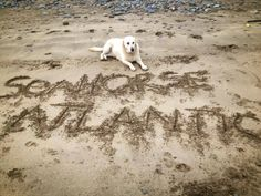 www.seahorseatlantic.ie Sea Weed Recipes, Marine Environment, Seaweed, Dog Cat, Horses, Pets, Natural, Healthy, Animals