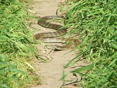 World's Most Poisonous Snake Ever - World's Most Venomous Snake – and Most Fierce Snake in the World