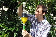 Technician Tony Dickens attaches the 3-D printed insect trap onto a tree. / Courtesy Florida Department of Agriculture and Consumer Services