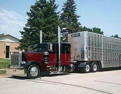 Custom Semi Cattle Trucks | ... Peterbilt, Bullwagon, Big Irons, Custom Rigs, Big Riggs, Big Trucks