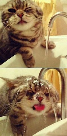 "cute kitty trying to drink water from the faucet! (^.^) Thanks, Pinterest Pinners, for stopping by, viewing, re-pinning,  following my boards.  Have a beautiful day! ^..^ and ""Feel free to share on Pinterest ^..^   #catsandme #cats #doghealthcareblog"