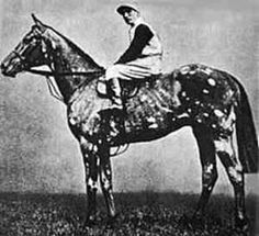 The History of the Grey Thoroughbred - The Tetrarch, 1913