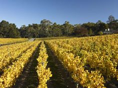 Adelaide Hills. My adopted second home. Would be where I started a vineyard if I had the opportunity.