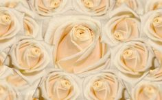 Cream roses, the softness of feelings Cream Roses, Respect, Peace, Passion, Feelings, Floral, Flowers, Plants, Florals
