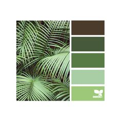 Design Seeds ❤ liked on Polyvore featuring design seeds, backgrounds, green, colors and photo