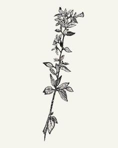 Botanical Ink Drawing  8x10 print  Pen Leaves Lines by modpretties.