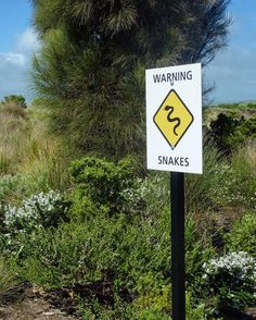 I didn't see any snakes while traveling but you can never look out enough   #australia #workandtravel #travel #traveling #backpacking #backpacker #wanderlust #wander #greatoceanroad  #ausfeels @australia #exploreaustralia #socialifeaustralia #wanderaustralia #australia_shotz @greatoceanroad #radtravel #wedriveaustralia #visitgreatoceanroad #southwestvic #travelbrag #snake #nature #warning by taralovestraveling
