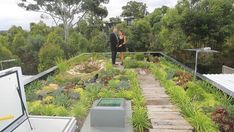 Chris and Belinda Knierim on the rooftop garden of their eco-house in the Sydney. Chris and Belind Beaumont House, Grand Designs Australia, Garden Design, Plants, Garage Roof, Rooftop Gardens, Green Roofs, French Riviera, Vertical Gardens