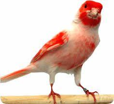 Well, hello there! Cute Birds, Sea Birds, Canary Birds, Bird Species, Acrylic Art, Bird Art, Sea Creatures, Bird Feathers, Beautiful Birds