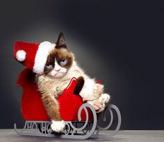"""Grumpy Cat can't be grumpy about this casting news. Aubrey Plaza will provide the voice of the famous kitty in a Lifetime movie called """"Grumpy Cat's Worst Christmas Ever,"""" the network has announced. Grumpy Cat Movie, Meme Grumpy Cat, Cat Memes, Grumpy Kitty, Christmas Movies, Christmas Humor, Merry Christmas, Xmas, Christmas 2014"""