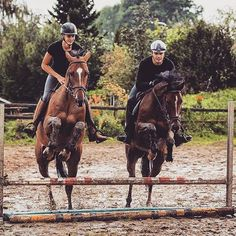 matt harnake and jesse drent Horse Love, Horse Girl, Beautiful Horses, Animals Beautiful, English Riding, Horse Pictures, Equine Photography, Show Horses, Horse Riding