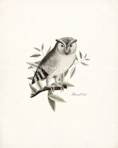 Antique Horned Owl Illustration  Natural by HighStreetVintage, $15.00