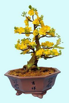 Bonsais are miniaturized versions of large trees and plants around the globe. Among the most popular bonsais is the trident maple bonsai. Bonsai Forest, Bonsai Art, Bonsai Plants, Bonsai Garden, Garden Trees, Bonsai Flowers, Ikebana, Terrarium, Maple Bonsai