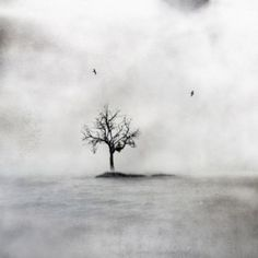 Yksin puussa - Alone in a Tree