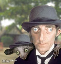 ✶Winner of the Celebrity / Pet lookalike contest. Marty Feldman and a lemur family animal called an Aye-Aye✶ Marty Feldman, Dog Breeds That Dont Shed, British Humor, Look Alike, Funny Faces, Celebrity Crush, Movie Stars, Family Photos, Weird