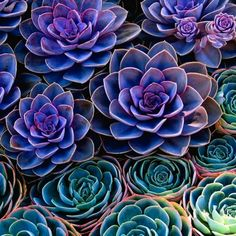 amazing color in these succulents.