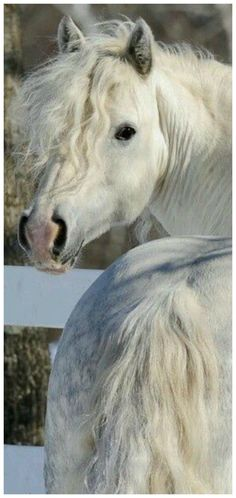 Horse Photos, Horse Pictures, Animal Pictures, Cute Horses, Horse Love, Most Beautiful Animals, Beautiful Horses, Animals And Pets, Cute Animals