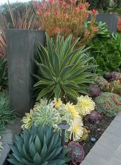 3 Simple and Impressive Tips Can Change Your Life: Backyard Garden Decor tropical backyard garden landscaping ideas.Backyard Garden Design To Get. Succulent Landscaping, Succulent Gardening, Planting Succulents, Backyard Landscaping, Organic Gardening, Succulent Plants, Cacti, Backyard Ideas, Modern Landscaping
