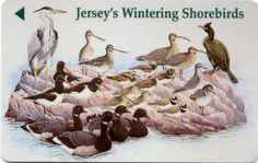 Telefoonkaart van Jersey: Jersey's Wintering Shorebirds
