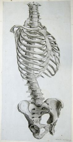 Side view of the bones of the torso.  Anatomy improv'd and illustrated with regard to the uses thereof in designing. (London: John Senex, 1723).