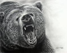 animalgazing:    Grizzly Bear ROAR IIby~eidolic