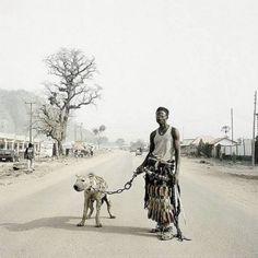afrikanische Haustiere