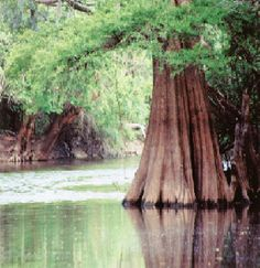 """Great Okefenokee Swamp, the largest swamp in North America.  Called the """"Land of Trembling Earth"""" by the Seminoles.  Want to kayak and explore."""