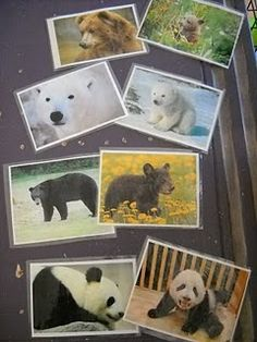 Letter B/Bears. Mommy/baby match. What a great science idea in general though!