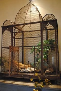 I actually want a bird cage this big, and a few birds to put in it ...