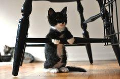 Tuxedo kitty at the bar by lovinkat