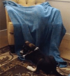 Blanket trap