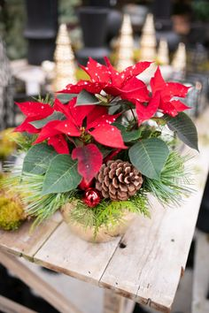 A speckled poinsettia makes us think of softly falling snow, although we're all warm and snug indoors by the fireplace! This design uses fresh evergreens, as well as a pinecone and baubles, to create a yuletide planter in a festive gold pot. Now you can snooze by the fireside with your snowflake dreams… Christmas Plants, Christmas Snowflakes, Christmas Wreaths, Country Christmas, Christmas Home, Christmas Centerpieces, Christmas Decorations, Old Fashioned Christmas, Pinecone