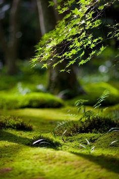 """""""Mossy Garden"""" - Sunlight streaming into the moss garden of Gio-ji in Kyoto, Japan [copyright: Yosuke Irie / dtd - Camera: Nikon Nikon DC] Beautiful World, Beautiful Places, Beautiful Forest, Beautiful Pictures, Forest Floor, Belle Photo, Mother Earth, Shades Of Green, Nature Photography"""