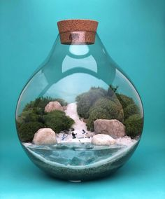This Company Makes Incredible Micro Ecosystems In Pots And You Will Definitely Want One In Your Home Best Terrarium Plants, Garden Terrarium, Interior Design Plants, Diy Garden Fountains, Paludarium, Glass Containers, Indoor Plants, Garden Design, Ecology