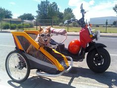 Total Ruckus member Nuevomexicanos dog in his Ruckus sidecar