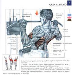 ejercicios de hombro y espalda gym