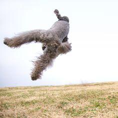 Jump up!!