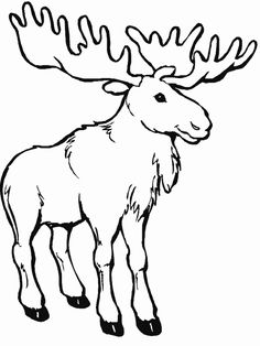 Moose coloring page - Free Printable Coloring Pages