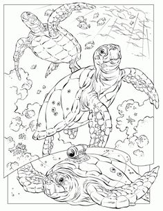 Realistic Sea Turtle Coloring Pages For Adults