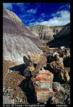 Colorful fossilized logs in Blue Mesa, afternoon. Petrified Forest National Park, Arizona
