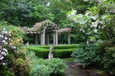 Helen Norman Photographer - garden - 14