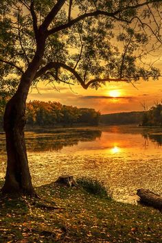 Golden sunset ~ So very soothing