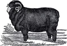 Vintage Sheep Clip Art - White and Black - The Graphics Fairy