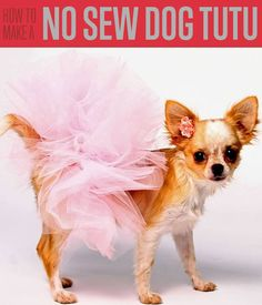 DIY tutu is easy and fun to make. I'm sure you're also wondering how to make a dog tutu. Won't it be cute to see your pet walking around in tutu skirts?