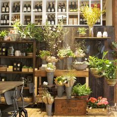 I just want a room in my house or potting shed that looks like this =o)
