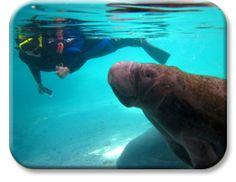 Preston and I will swim with manatees someday!